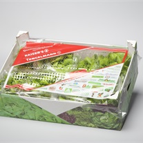 salad - cover sheet